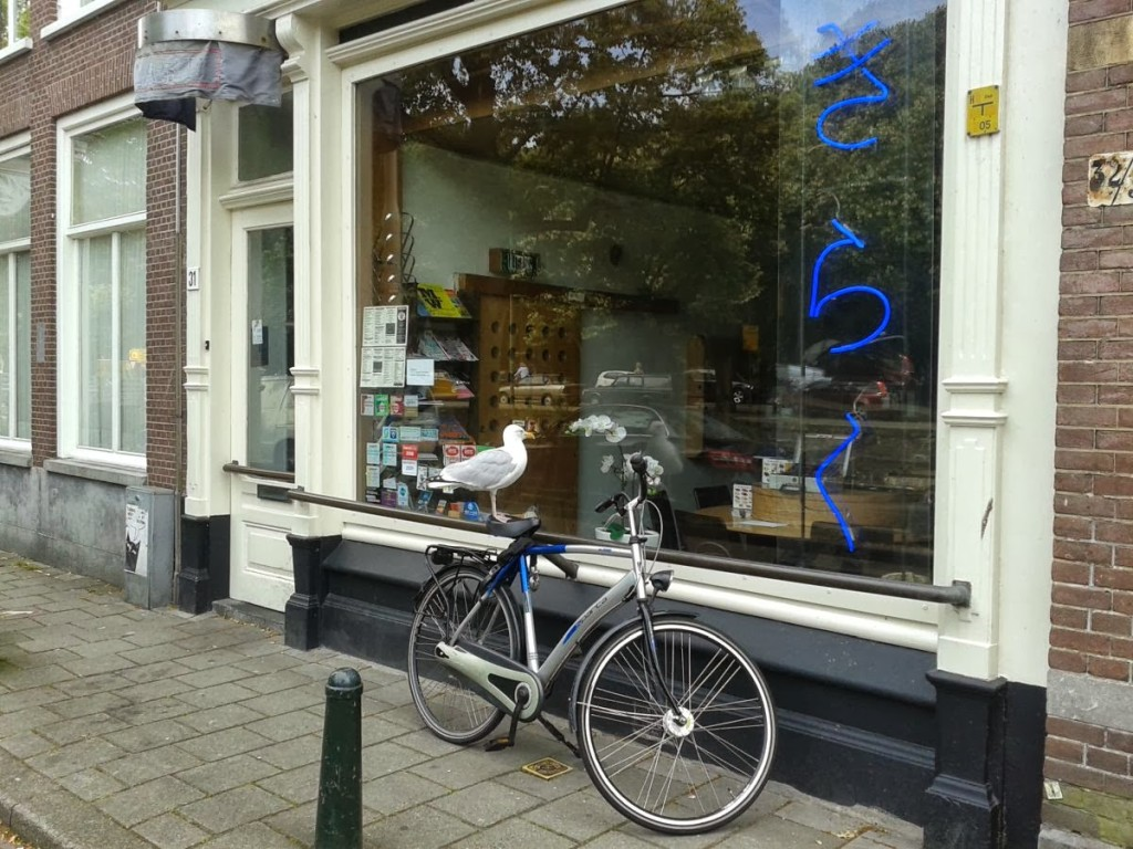 Everyone and their seagull rides a bike in Holland :)